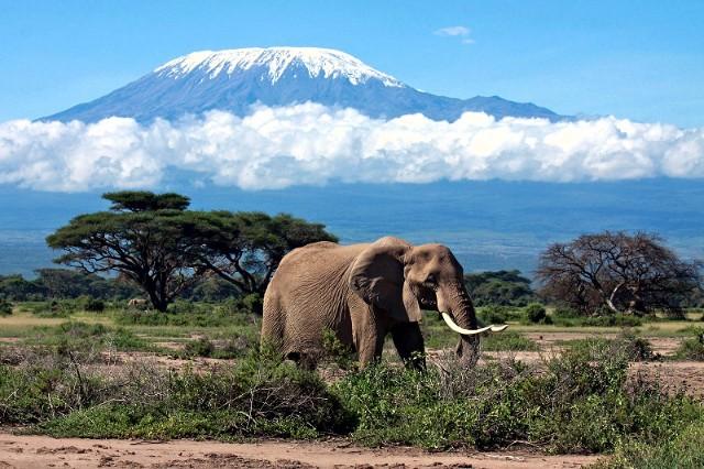 Африка. Kilimandjaro 1