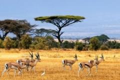 Африка. африка 2