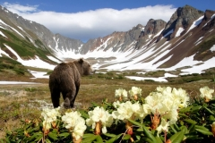 Камчатка.медведь 2