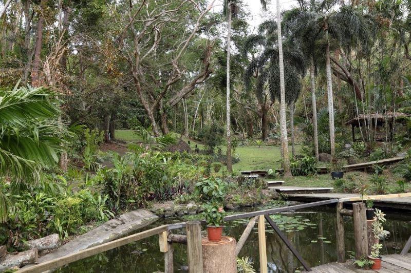 Сад спящего гиганта