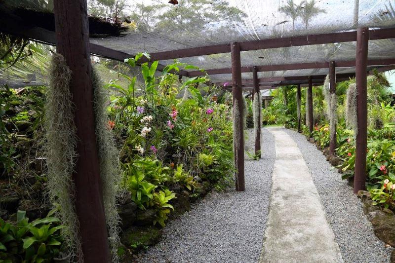 Сад спящего гиганта. Оранжерея