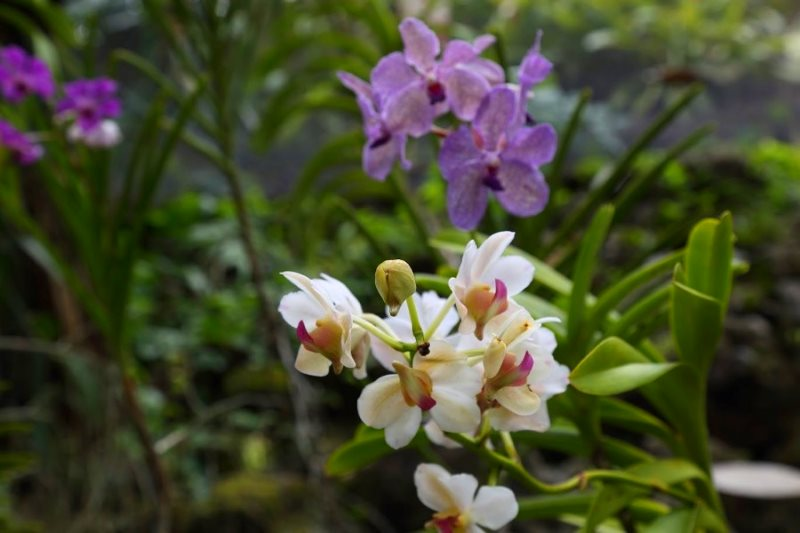 Сад спящего гиганта. Орхидеи
