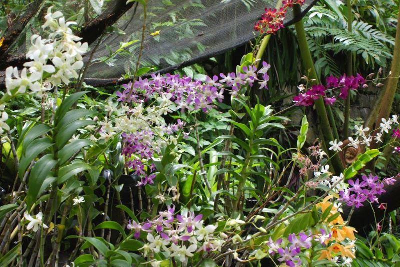 Сад спящего гиганта. Цветы