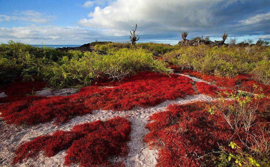 Галапагосские острова. Эквадор
