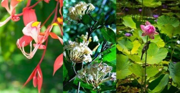 где находится ботанический сад Таити