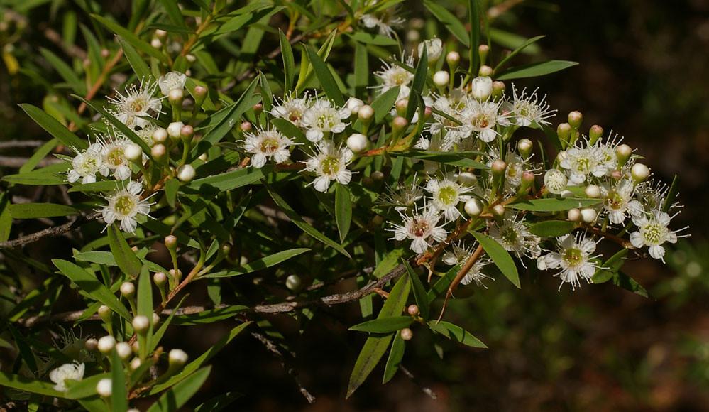 Национальный ботанический сад Австралии